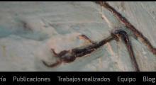 Taller Paleosenda. 4º E.P.